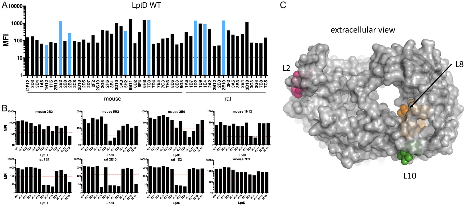 Massive antibody discovery used to probe structure–function