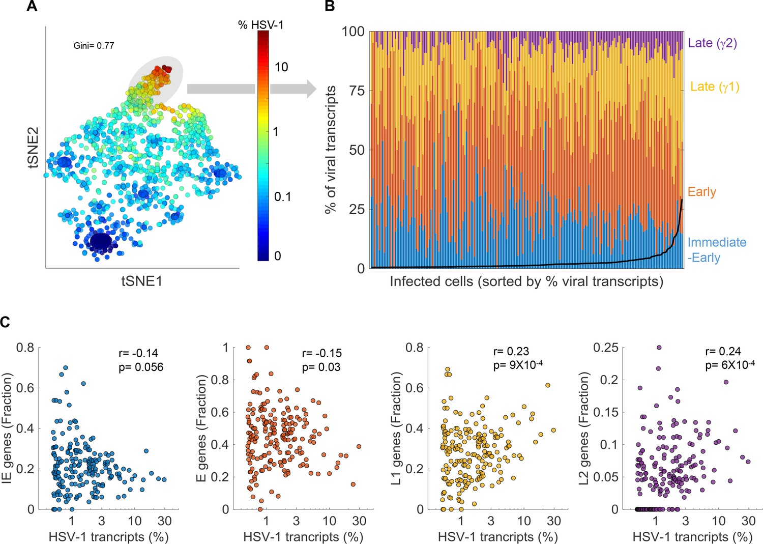 HSV-1 single-cell analysis reveals the activation of anti