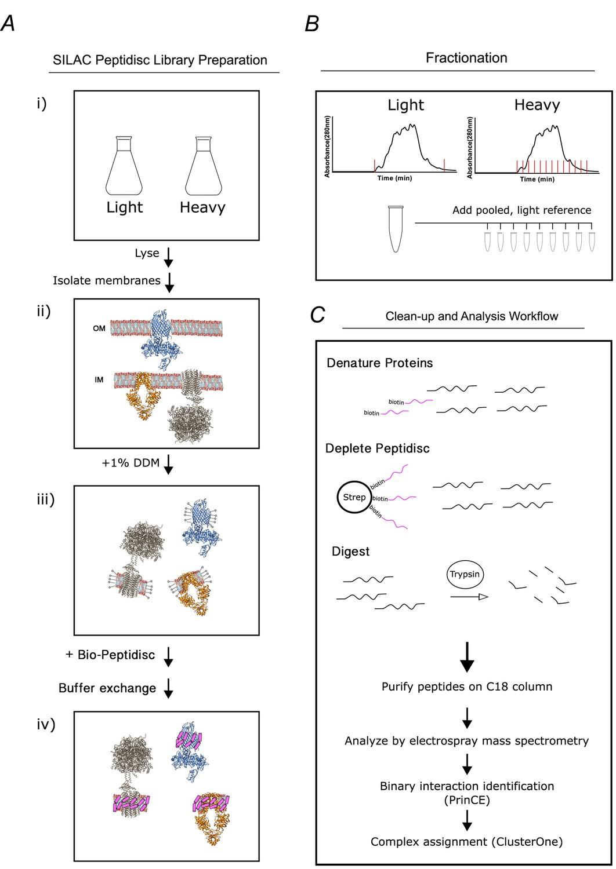 Profiling the Escherichia coli membrane protein interactome