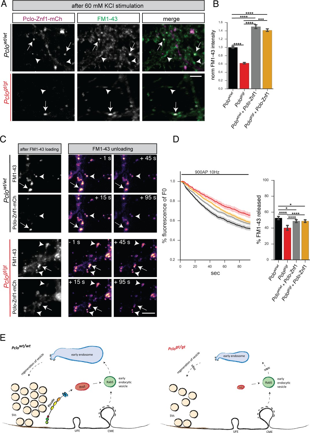 Critical role for Piccolo in synaptic vesicle retrieval | eLife