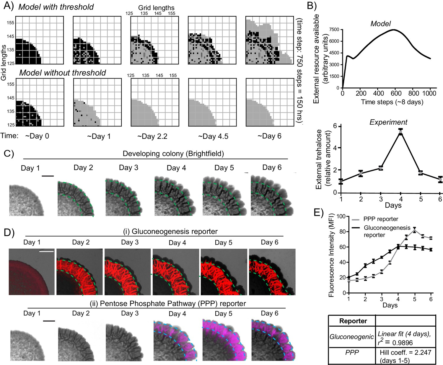 Metabolic constraints drive self-organization of specialized