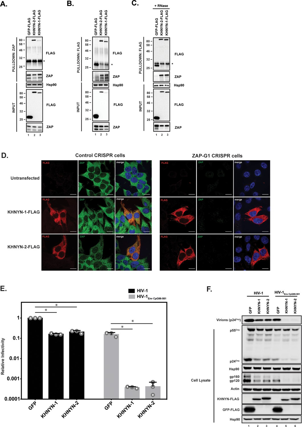KHNYN is essential for the zinc finger antiviral protein