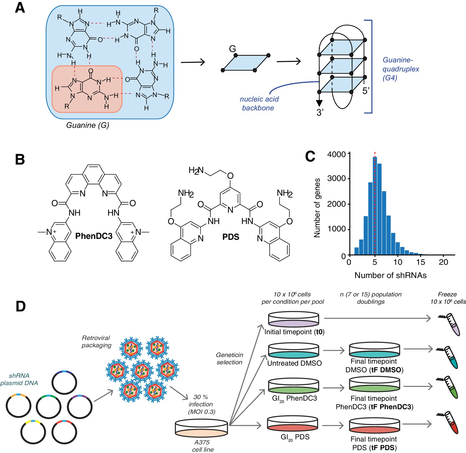 Figures and data in Genetic interactions of G-quadruplexes