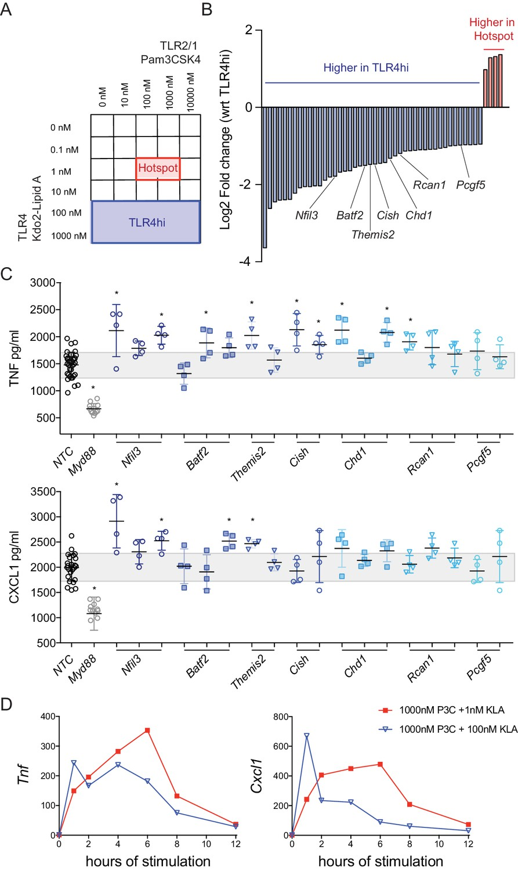 IFN-mediated negative feedback supports bacteria class