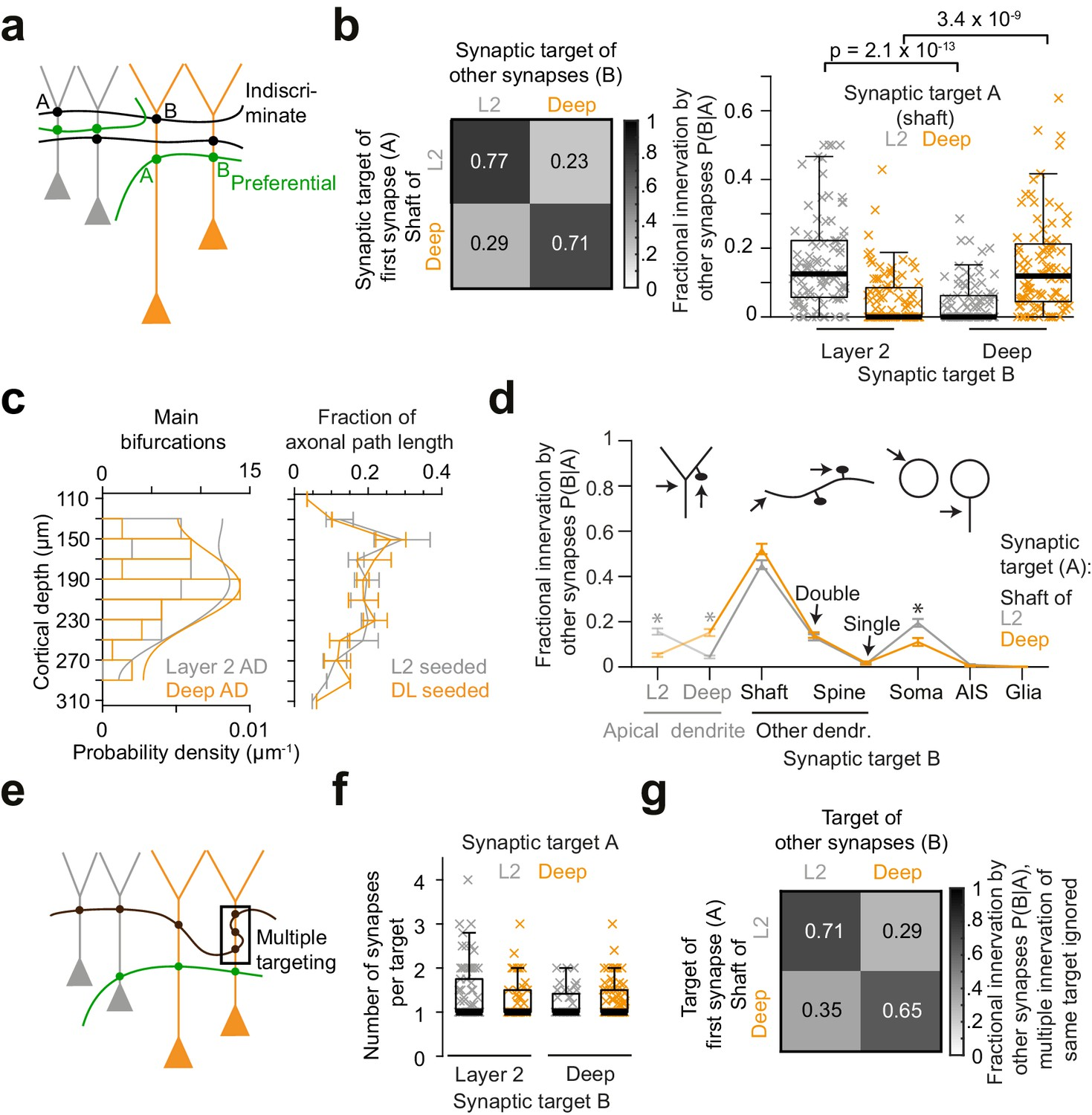 Cell Type Specific Innervation Of Cortical Pyramidal Cells At Their Apical Dendrites Elife