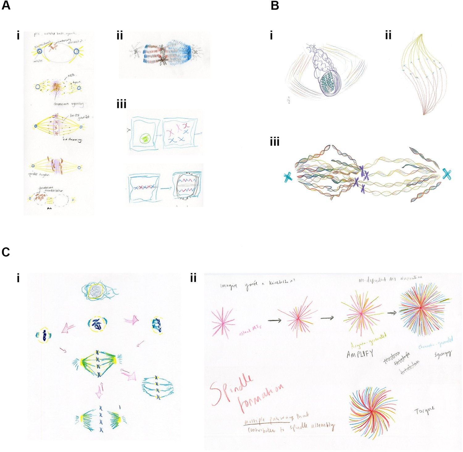 Philosophy of Biology: Drawing and the dynamic nature of