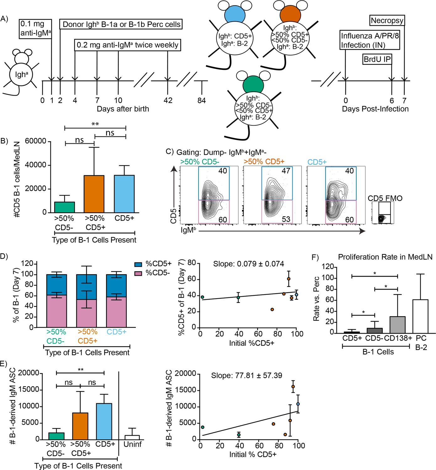 TLR induces reorganization of the IgM-BCR complex regulating