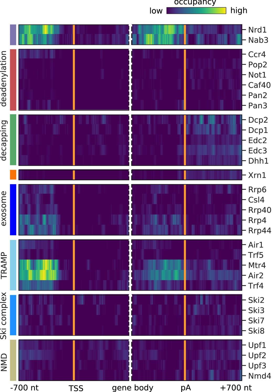 Transcriptome maps of general eukaryotic RNA degradation factors | eLife