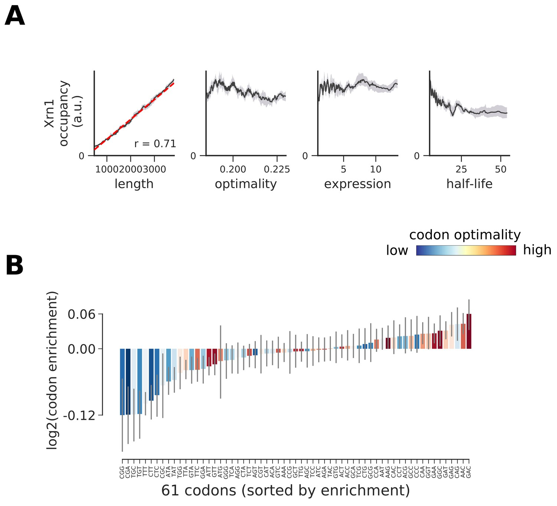 Transcriptome maps of general eukaryotic RNA degradation