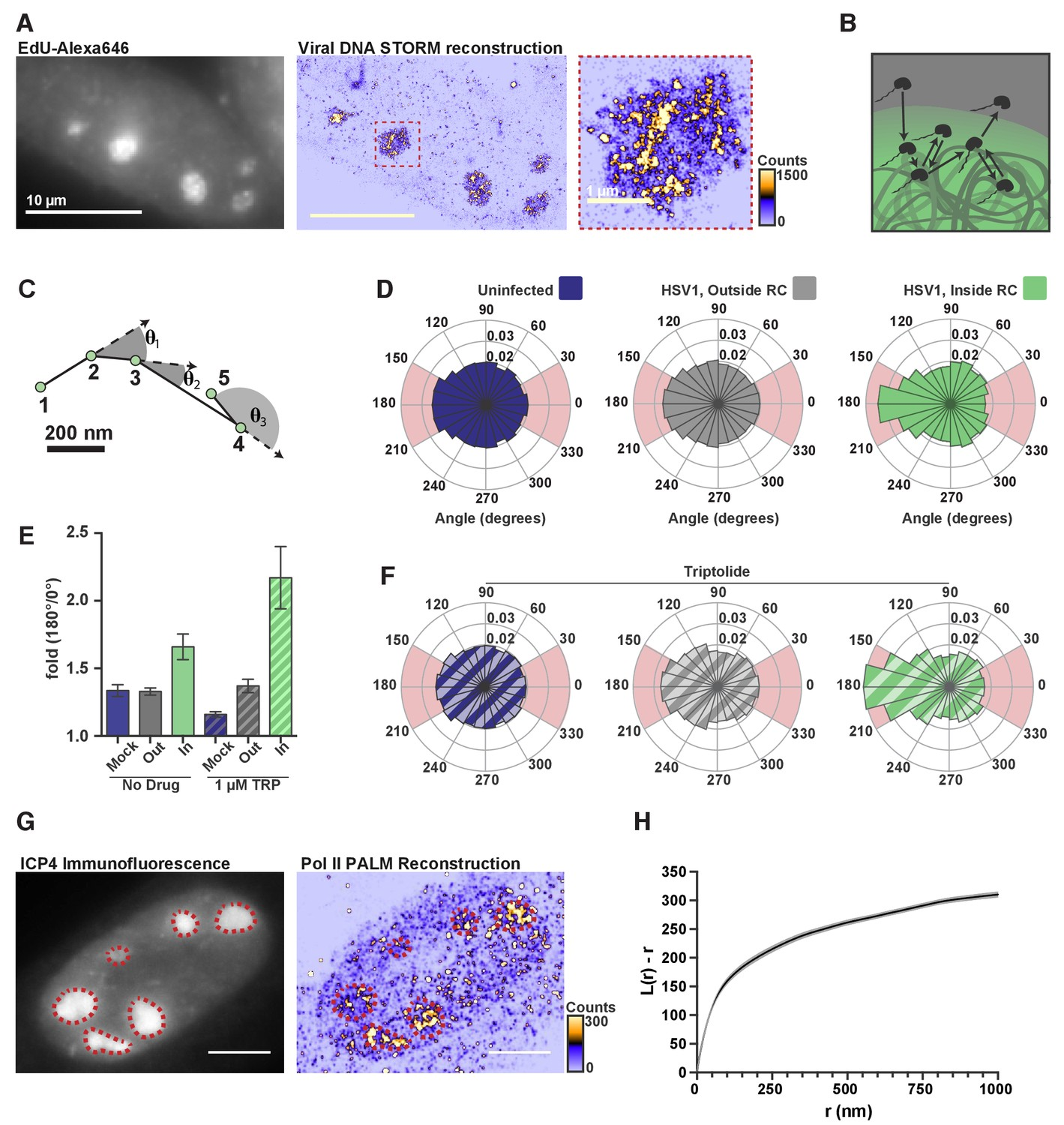 Evidence for DNA-mediated nuclear compartmentalization