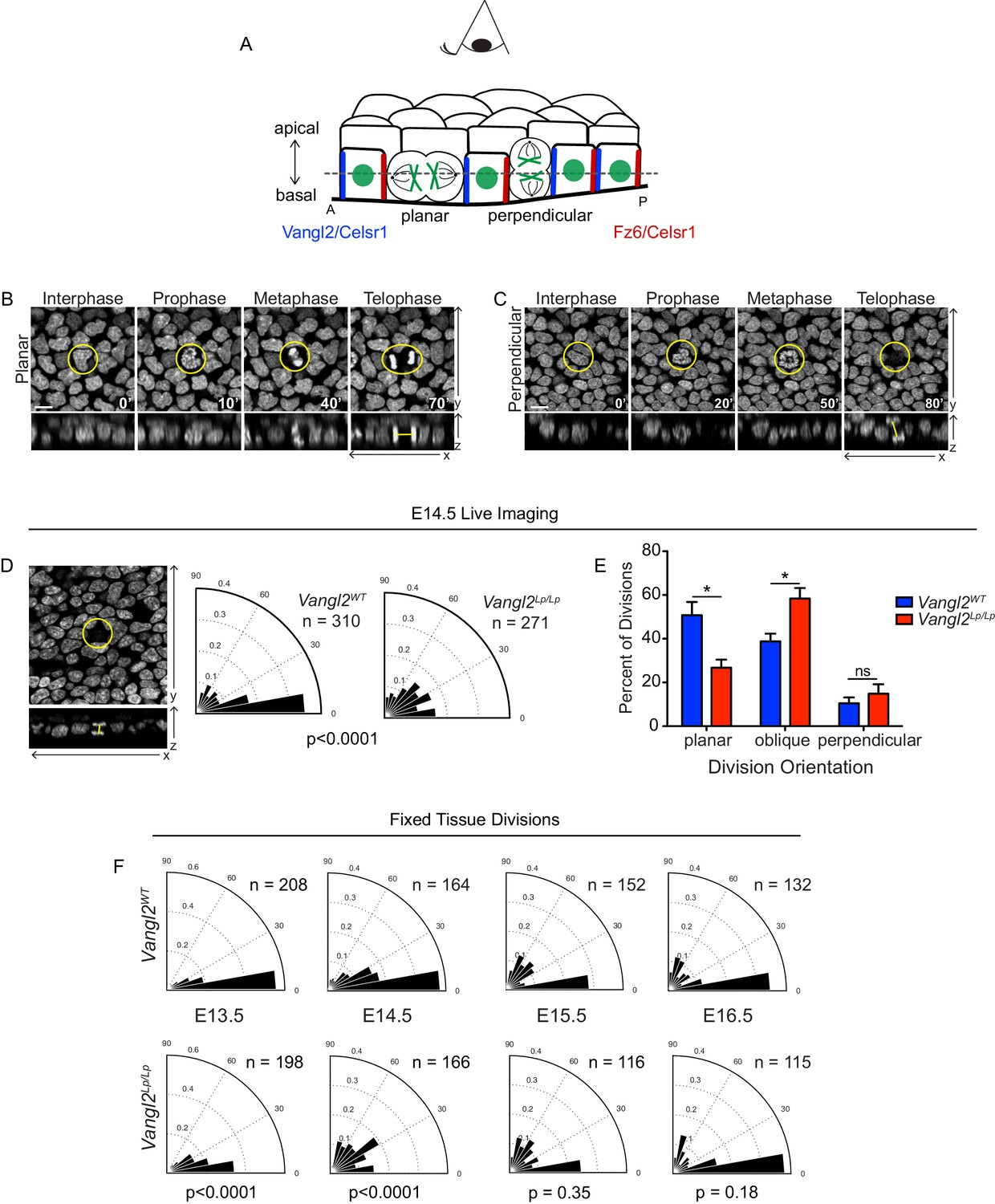Epithelial geometry regulates spindle orientation and