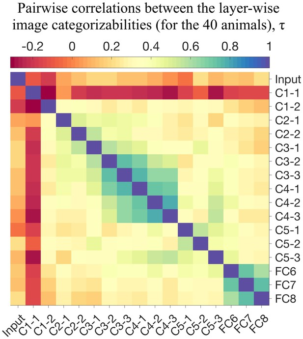 The nature of the animacy organization in human ventral