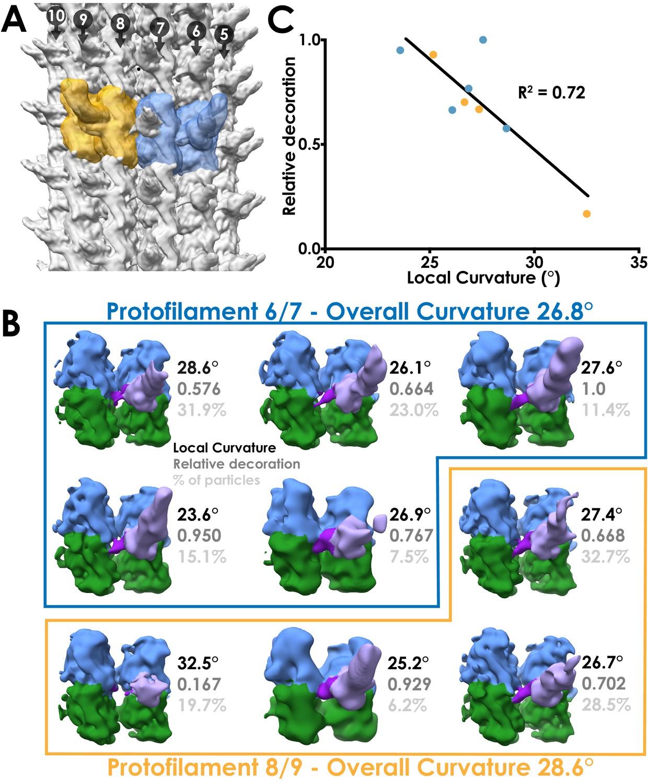 Cryo-EM of dynein microtubule-binding domains shows how an axonemal