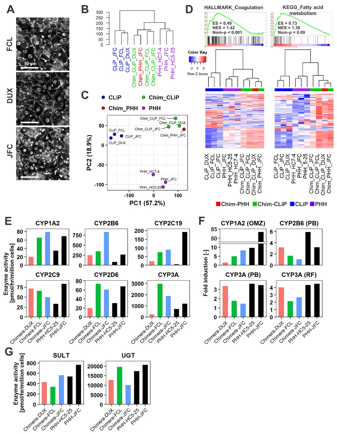 Generation of human hepatic progenitor cells with