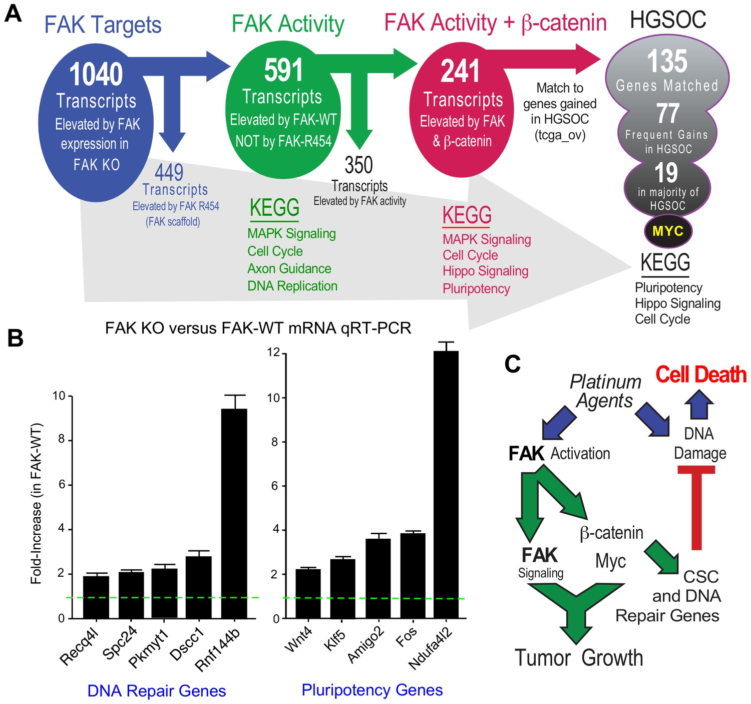 FAK activity sustains intrinsic and acquired ovarian cancer