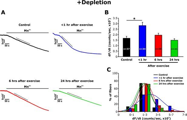 1 Hr Photo >> Transverse Tubule Remodeling Enhances Orai1 Dependent Ca2