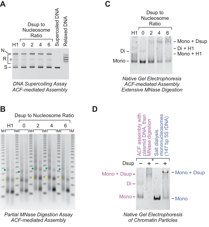 The Tardigrade Damage Suppressor Protein Binds To