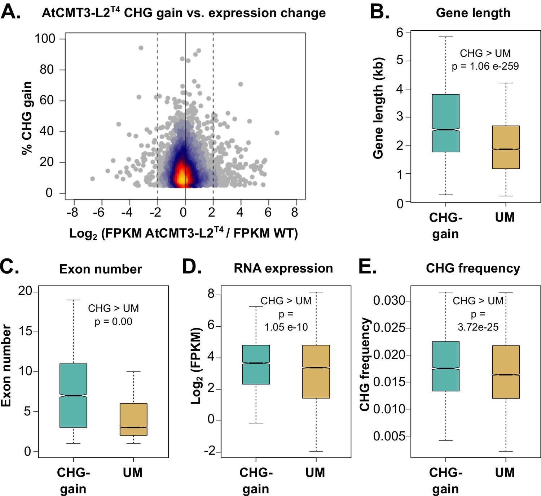 Epimutations are associated with CHROMOMETHYLASE 3-induced de novo