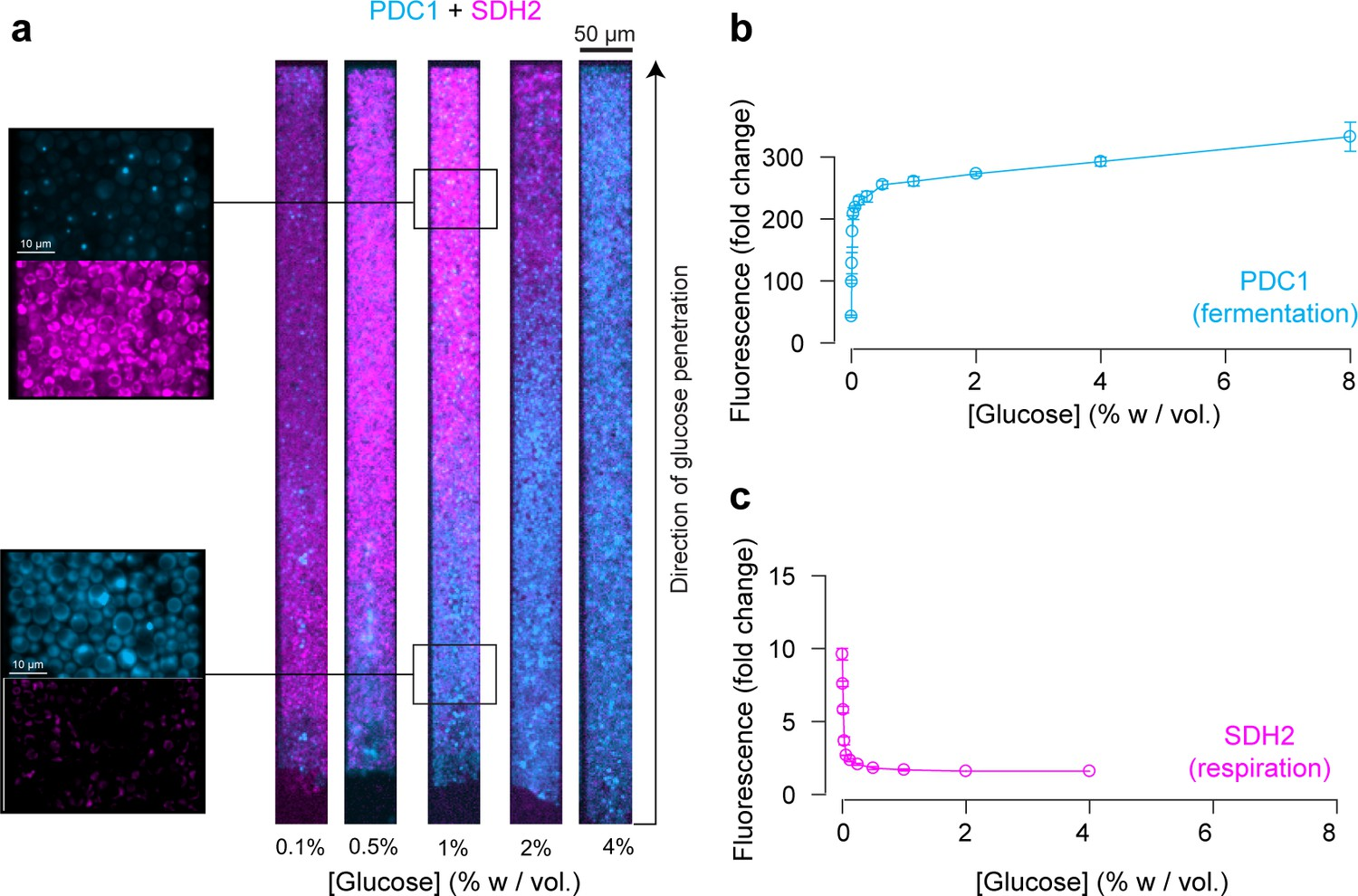A microfluidic device for inferring metabolic landscapes in