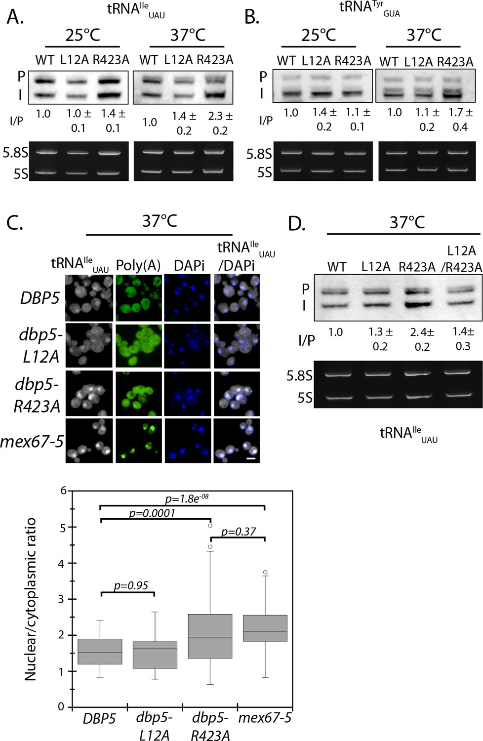 A nuclear role for the DEAD-box protein Dbp5 in tRNA export