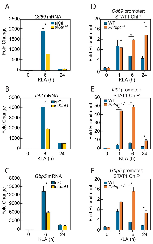 PHLPP1 counter-regulates STAT1-mediated inflammatory