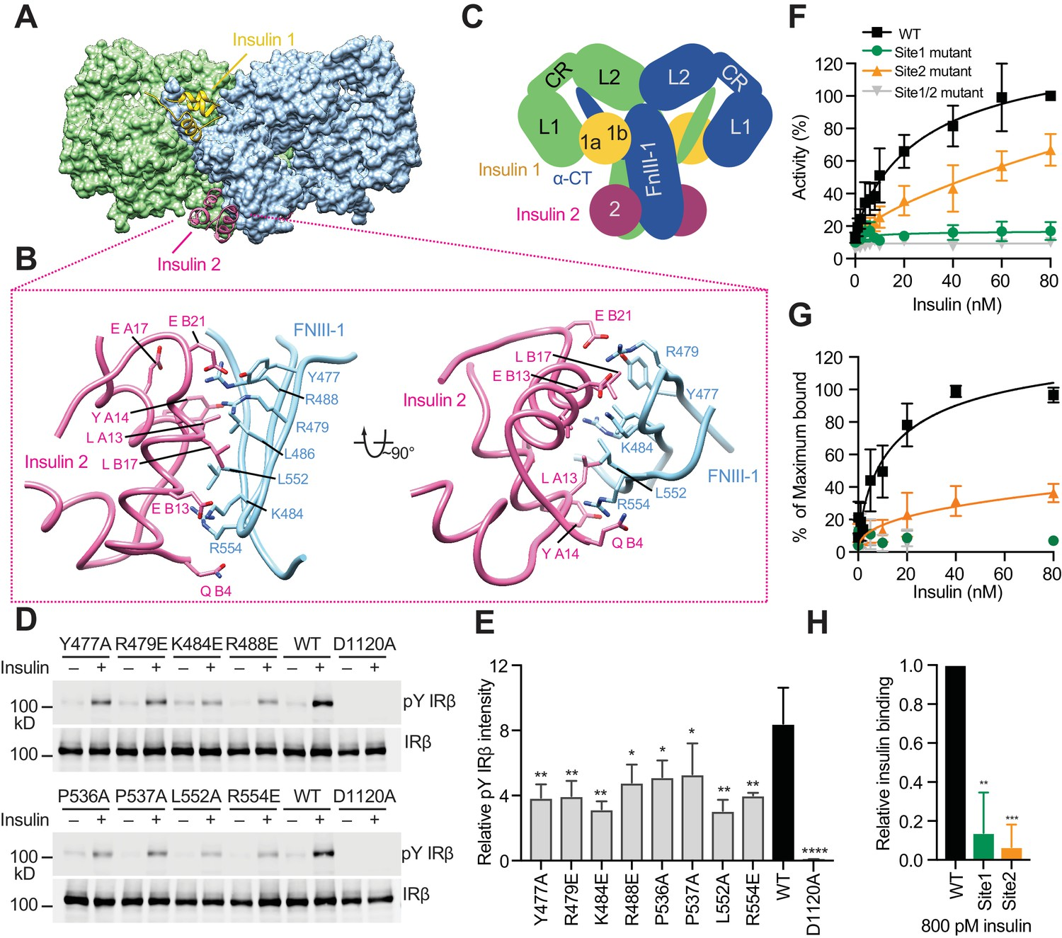 Activation Mechanism Of The Insulin Receptor Revealed By