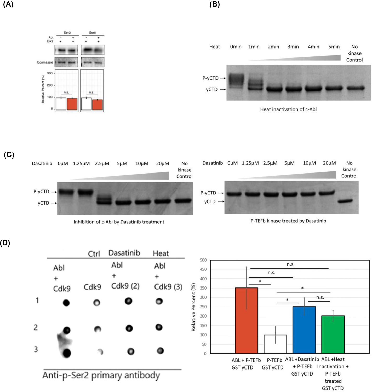 Tyr1 phosphorylation promotes phosphorylation of Ser2 on the