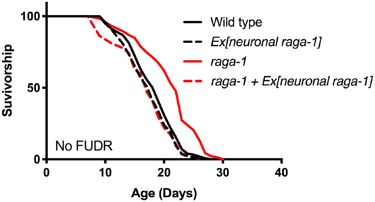 Neuronal TORC1 modulates longevity via AMPK and cell