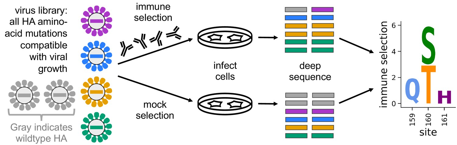 Mapping person-to-person variation in viral mutations that