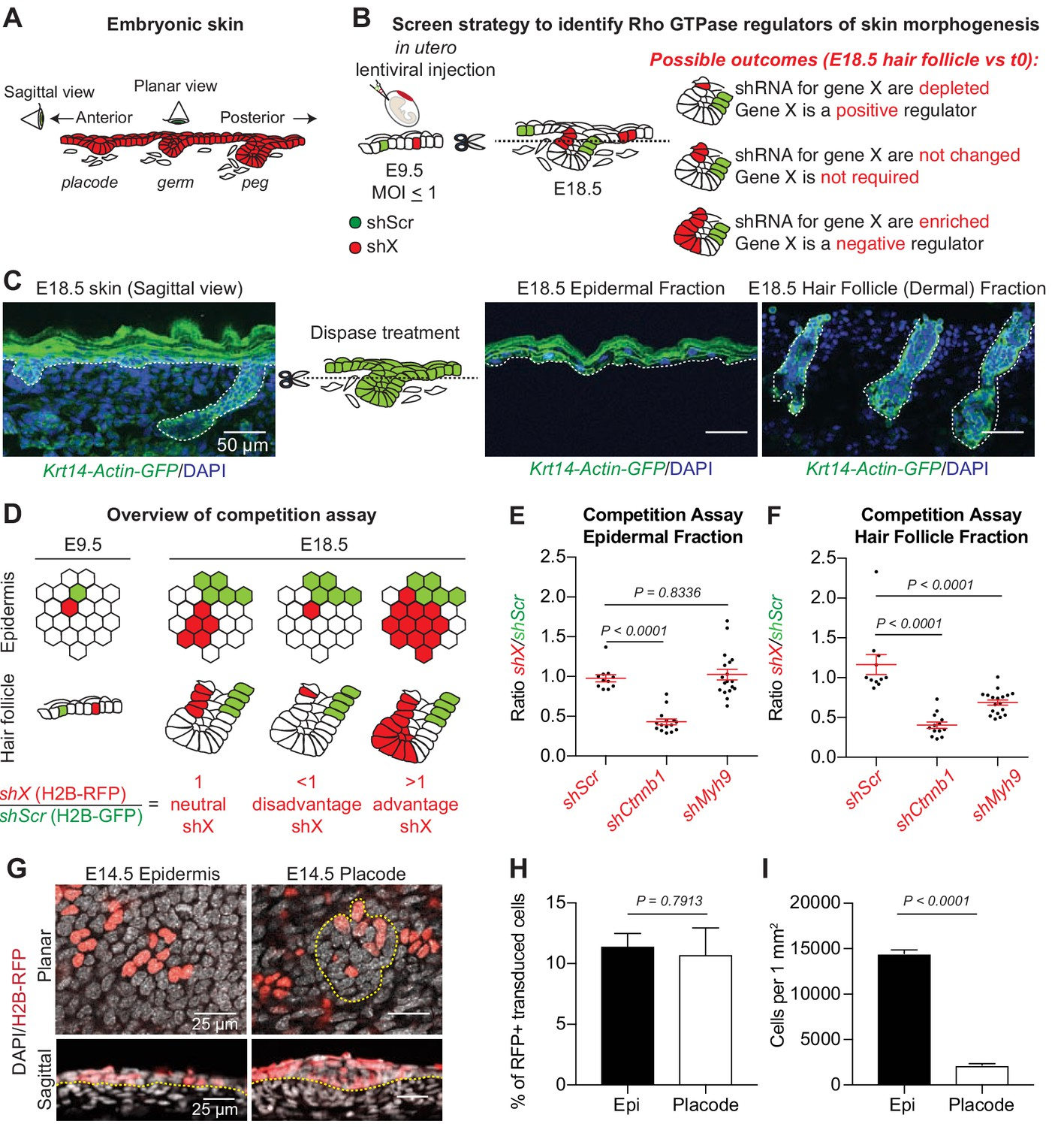 An Rnai Screen Unravels The Complexities Of Rho Gtpase Networks In Skin Morphogenesis Elife Skin and capes | vimeworld. an rnai screen unravels the