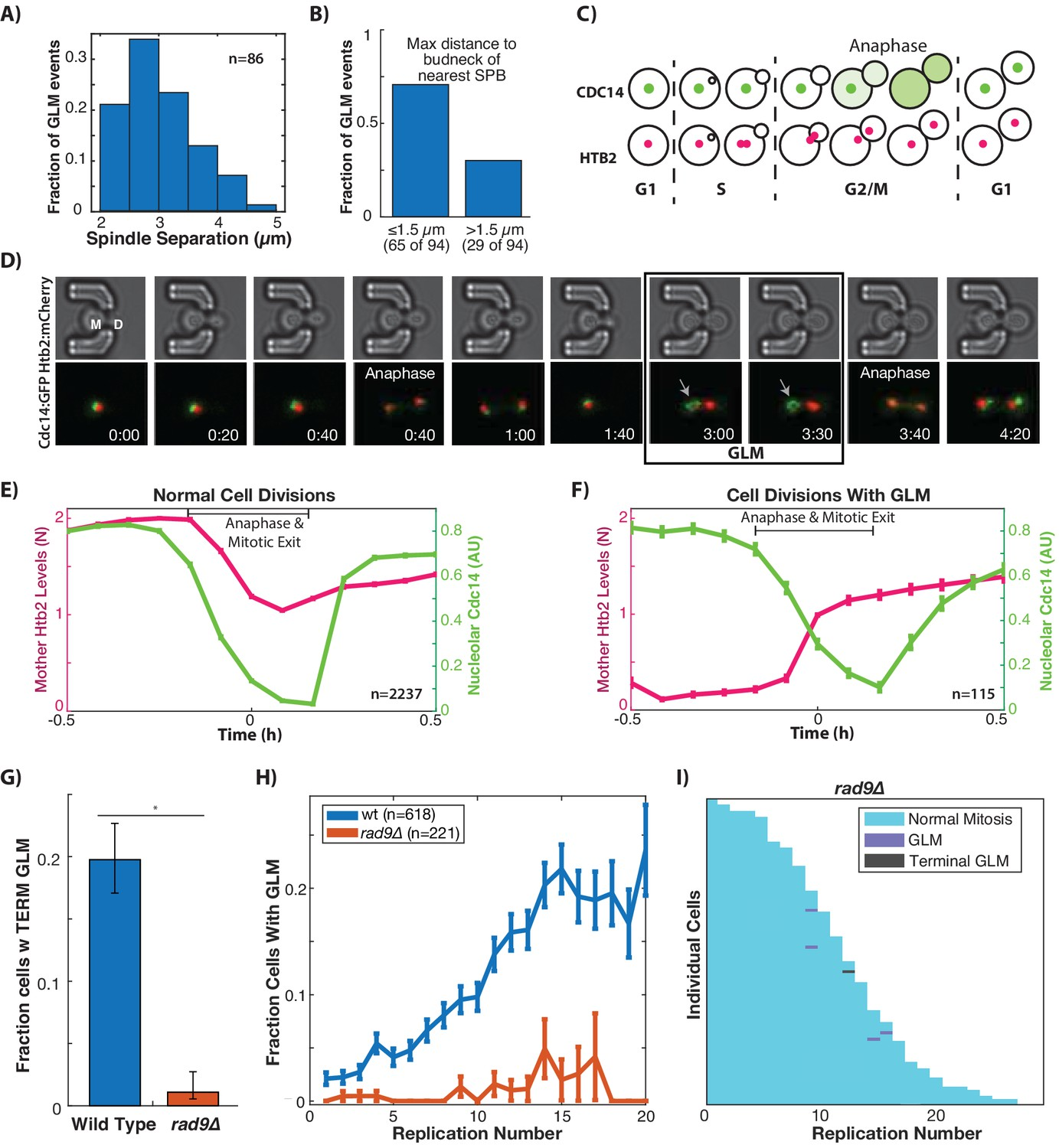 DNA damage checkpoint activation impairs chromatin