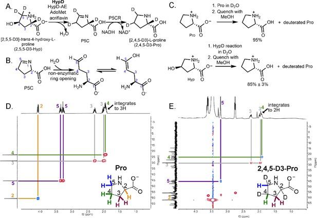 Molecular basis for catabolism of the abundant metabolite ...