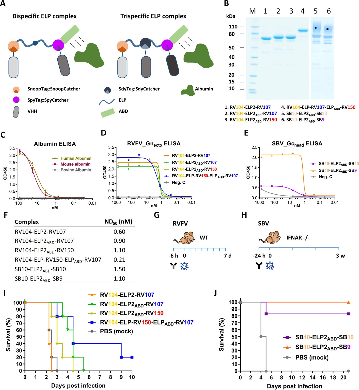 Trispecific Antibody Usually Created By Using Variable: Multimeric Single-domain Antibody Complexes Protect