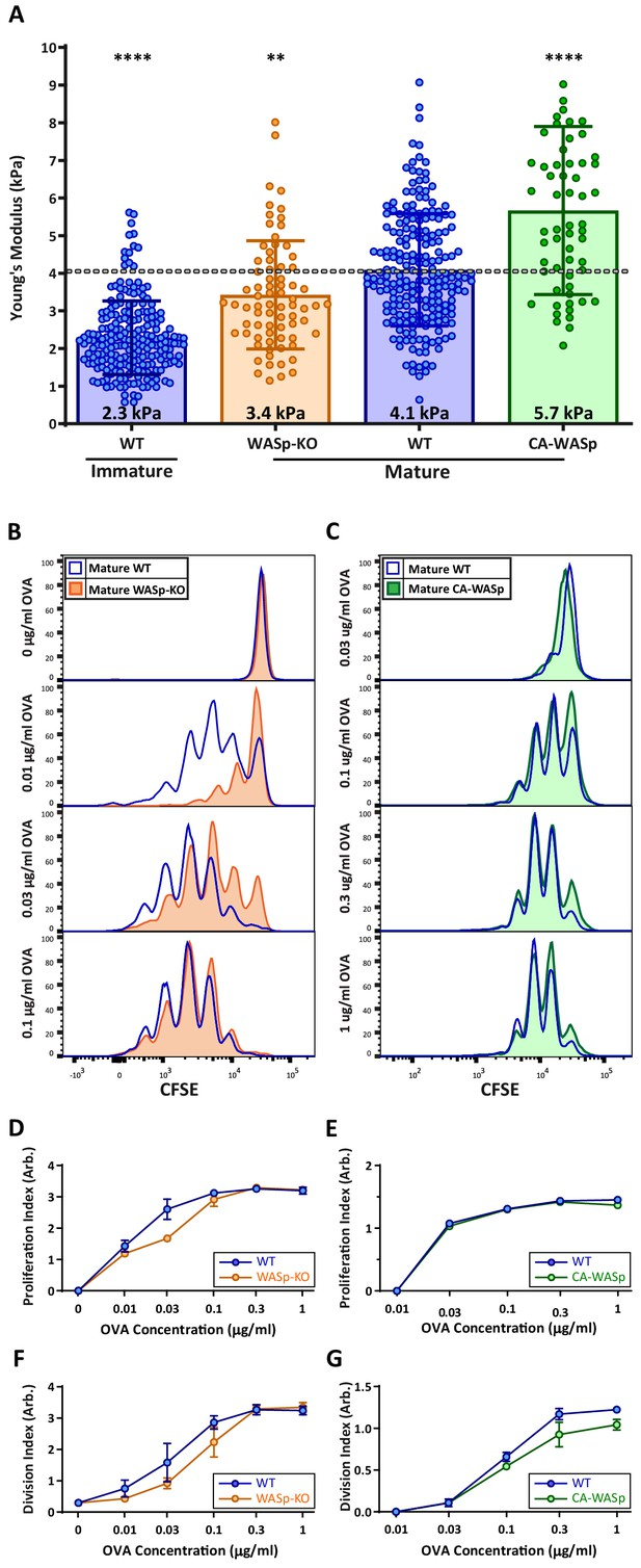 Mouse T cell priming is enhanced by maturation-dependent ...