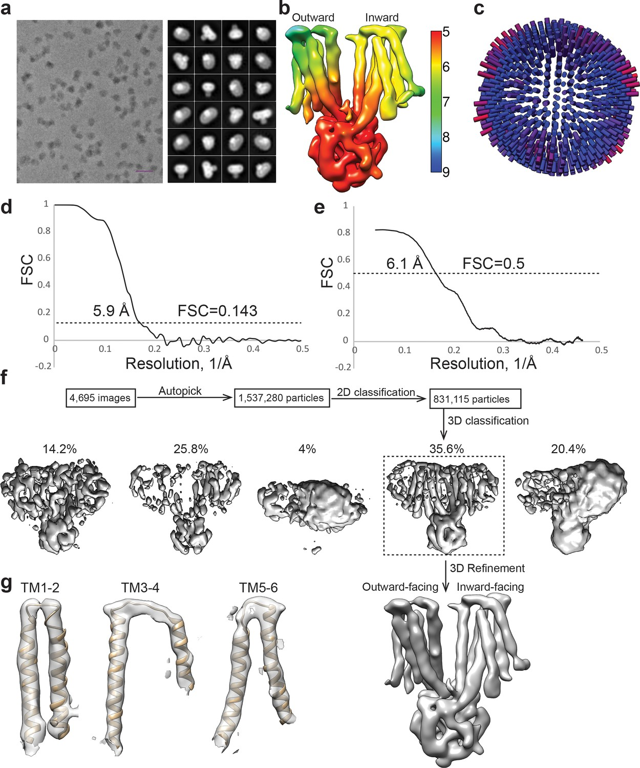 Figures and data in Cryo-EM structure of the yeast TREX